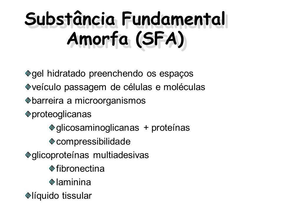Substância Fundamental Amorfa (SFA)