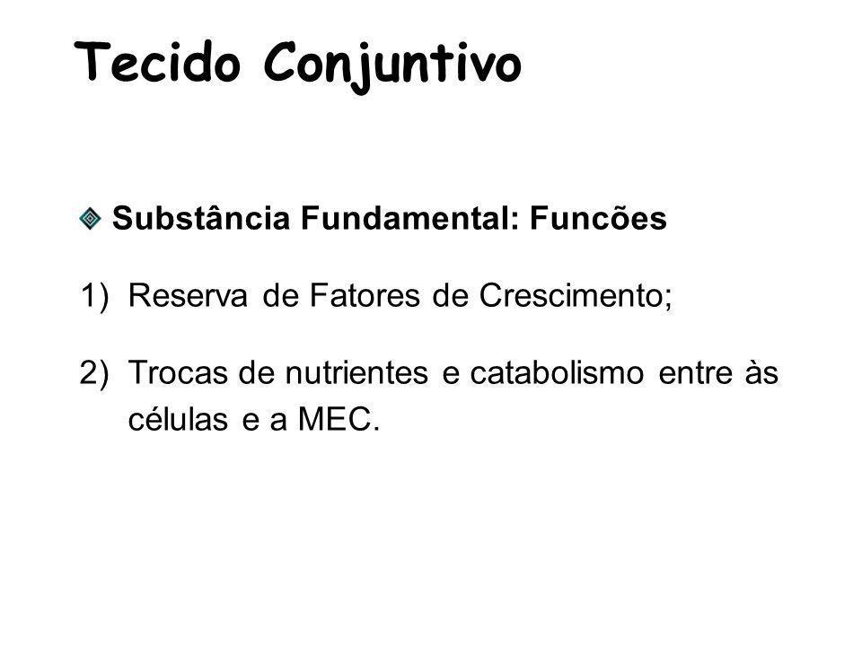 Tecido Conjuntivo Substância Fundamental: Funcões