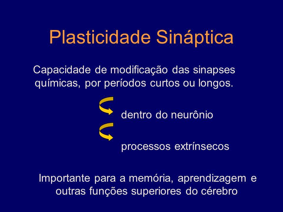 Plasticidade Sináptica