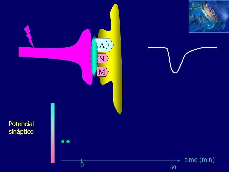 A A N M Potencial sináptico time (min) 60