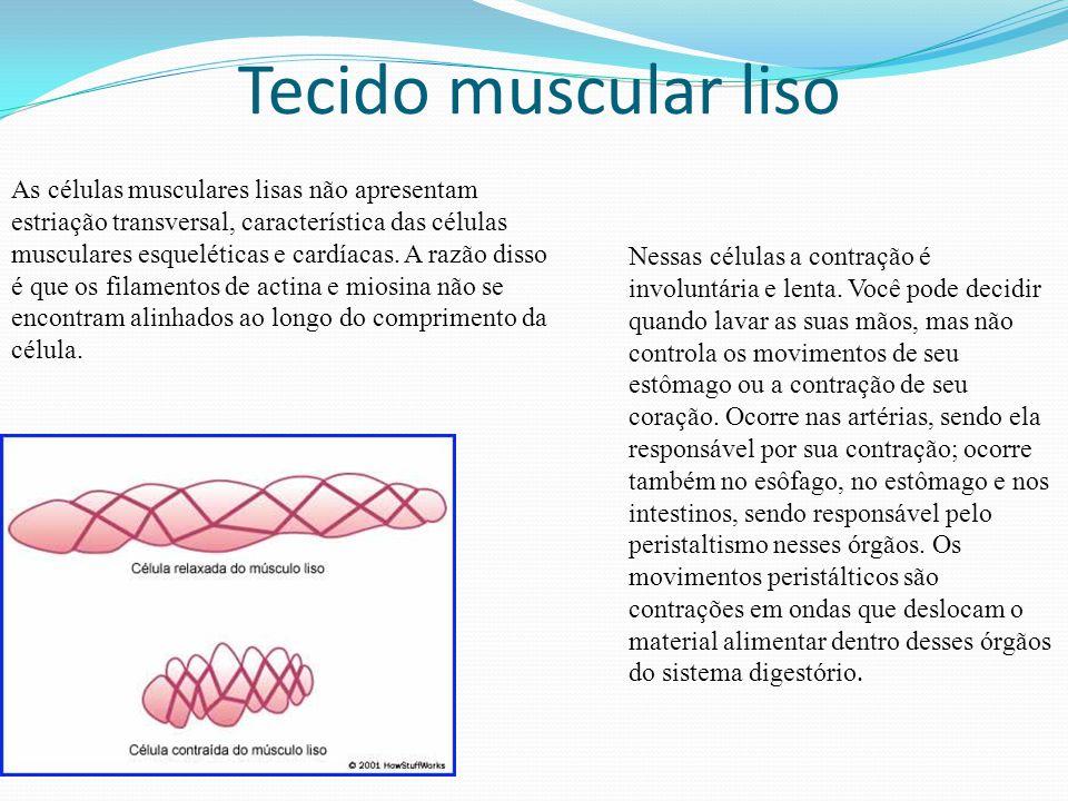 Tecido muscular liso