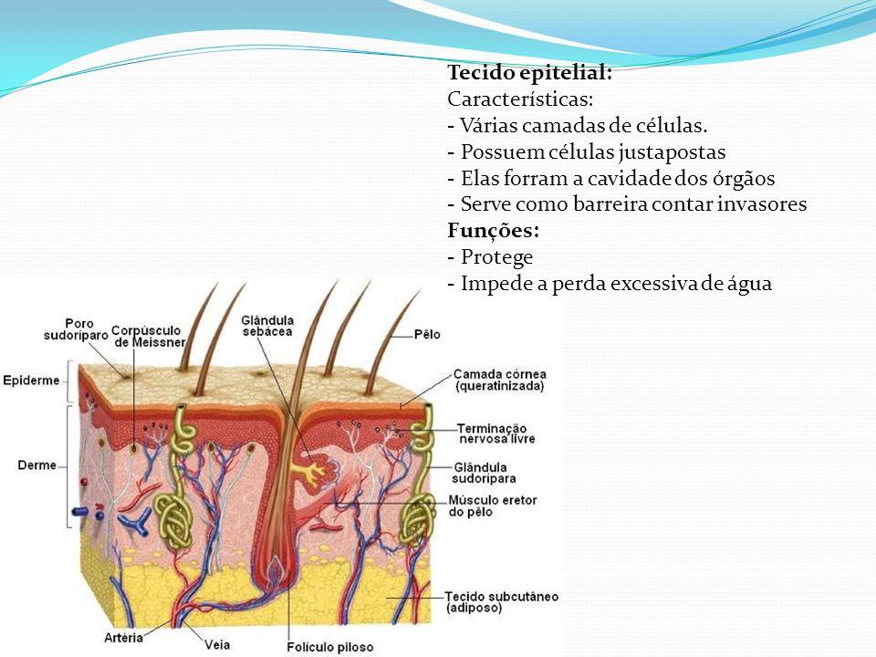 Tecido epitelial: Características: - Várias camadas de células. - Possuem células justapostas. - Elas forram a cavidade dos órgãos.