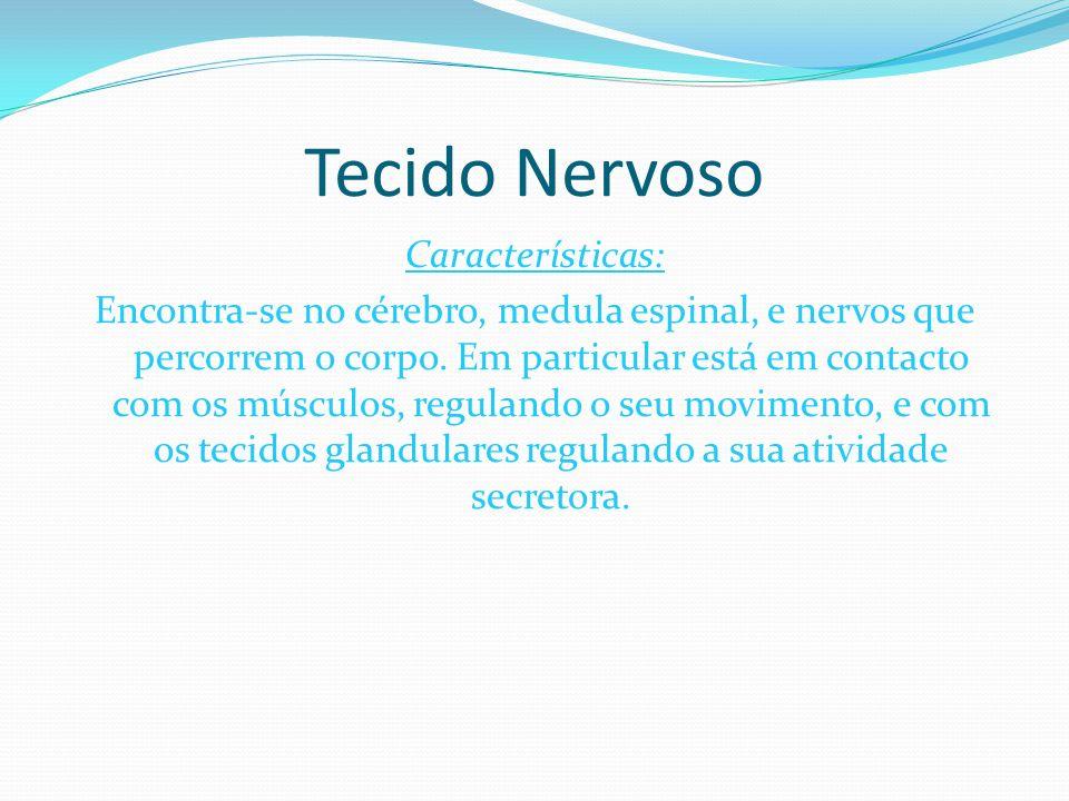 Tecido Nervoso Características: