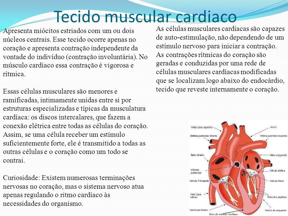 Tecido muscular cardiaco