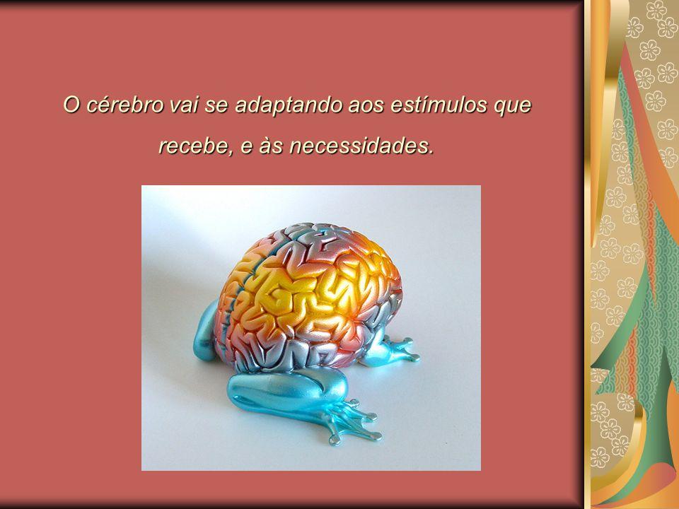 O cérebro vai se adaptando aos estímulos que recebe, e às necessidades.