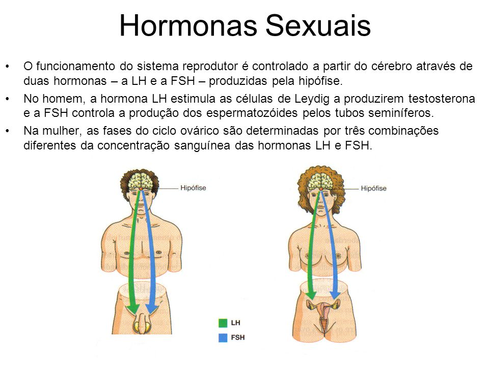 Hormonas Sexuais