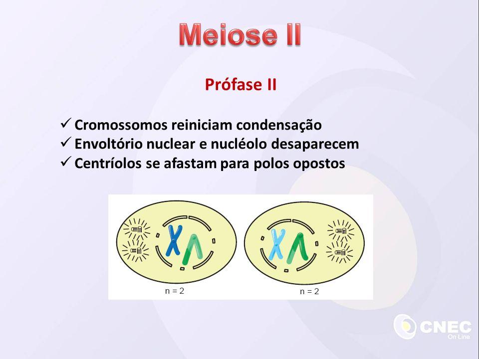 Meiose II Prófase II Cromossomos reiniciam condensação