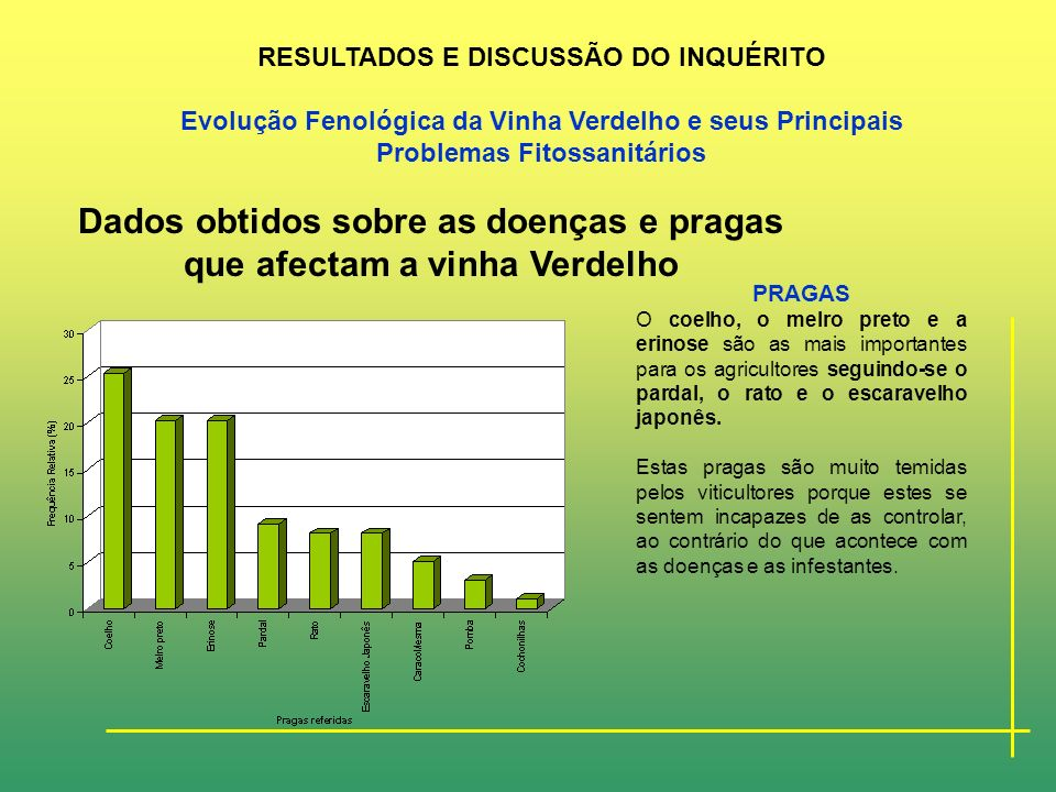 Dados obtidos sobre as doenças e pragas que afectam a vinha Verdelho