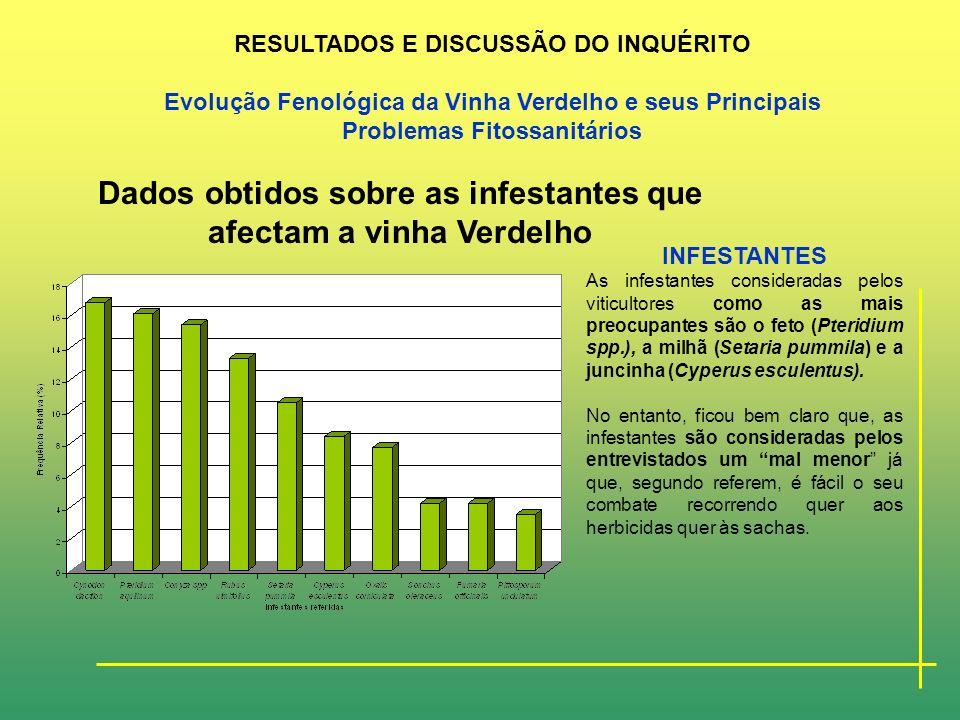 Dados obtidos sobre as infestantes que afectam a vinha Verdelho
