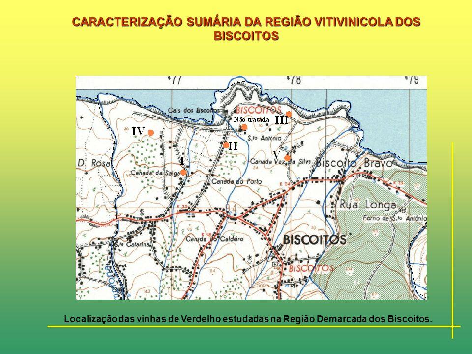 CARACTERIZAÇÃO SUMÁRIA DA REGIÃO VITIVINICOLA DOS BISCOITOS