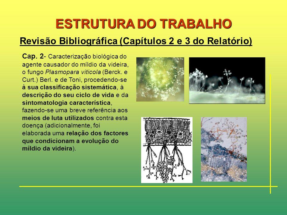 ESTRUTURA DO TRABALHO Revisão Bibliográfica (Capítulos 2 e 3 do Relatório)