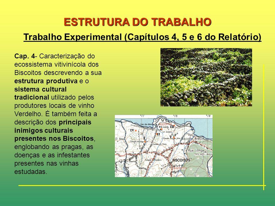 ESTRUTURA DO TRABALHO Trabalho Experimental (Capítulos 4, 5 e 6 do Relatório)