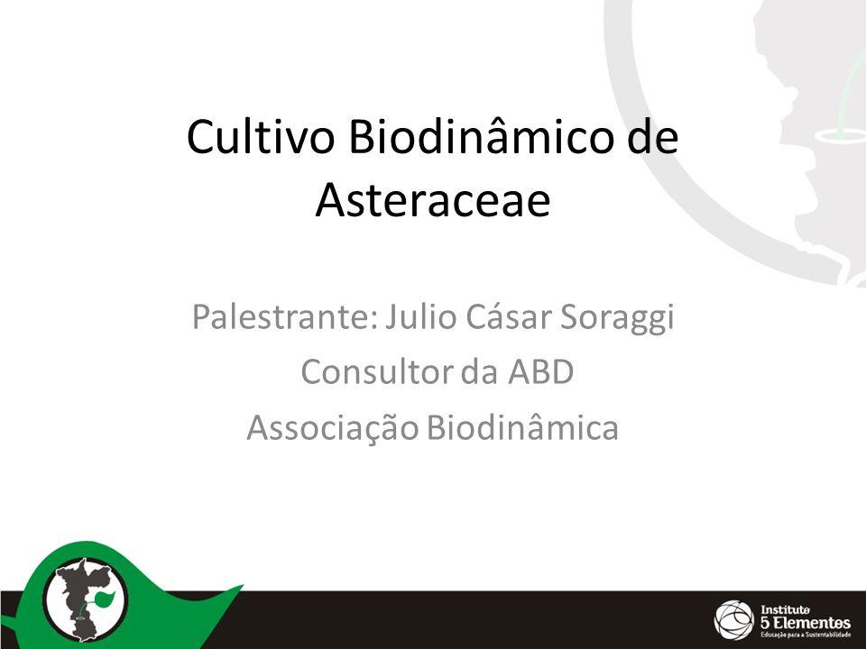 Cultivo Biodinâmico de Asteraceae