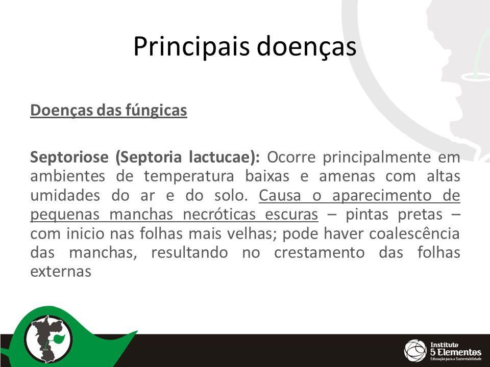 Principais doenças Doenças das fúngicas