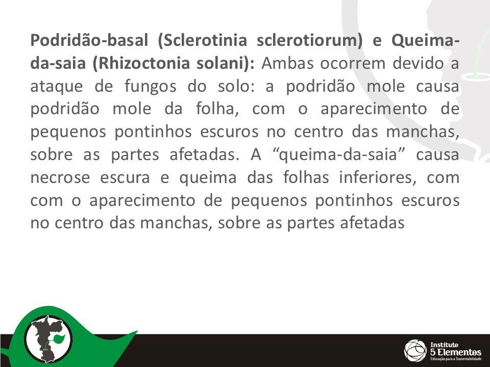 Podridão-basal (Sclerotinia sclerotiorum) e Queima-da-saia (Rhizoctonia solani): Ambas ocorrem devido a ataque de fungos do solo: a podridão mole causa podridão mole da folha, com o aparecimento de pequenos pontinhos escuros no centro das manchas, sobre as partes afetadas.