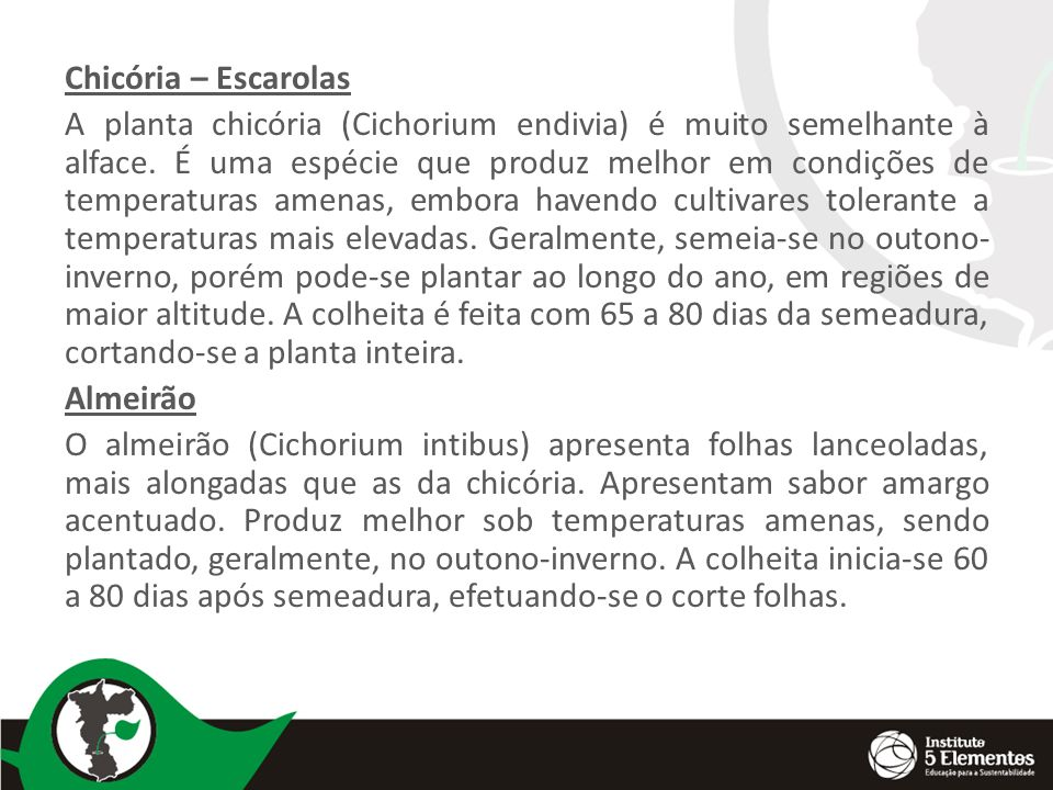 Chicória – Escarolas