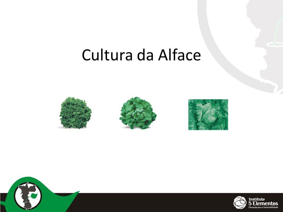 Cultura da Alface
