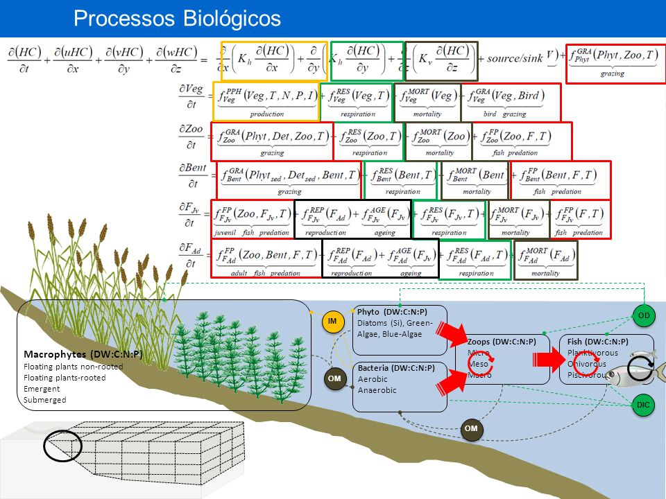 Processos Biológicos Macrophytes (DW:C:N:P) 11 Phyto (DW:C:N:P)