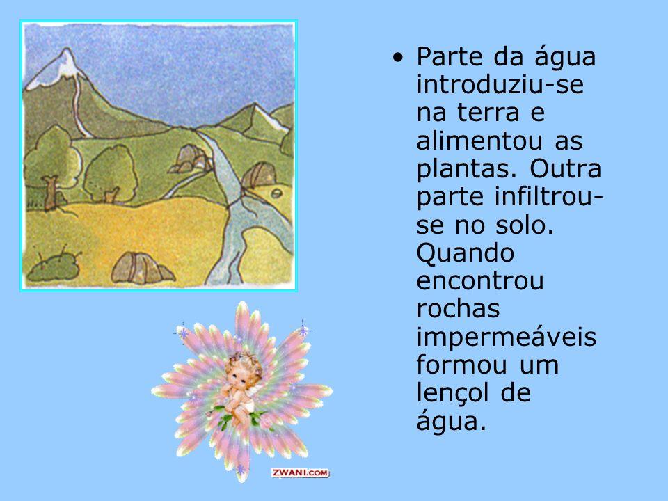 Parte da água introduziu-se na terra e alimentou as plantas