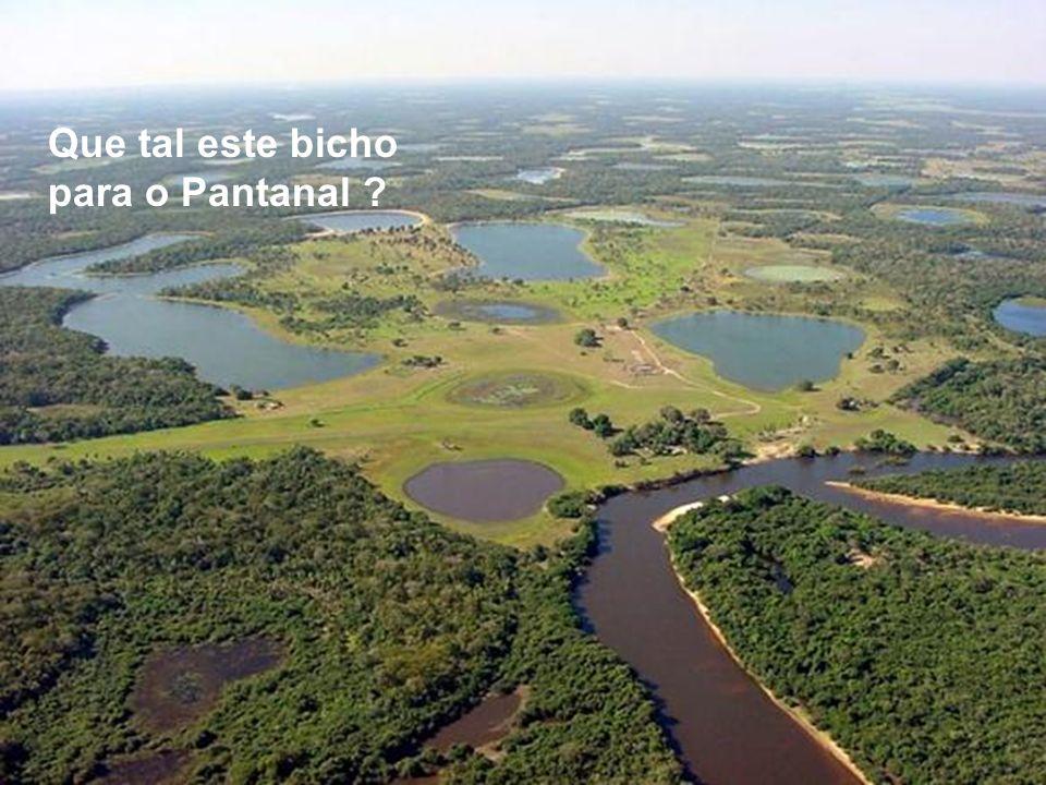 Que tal este bicho para o Pantanal