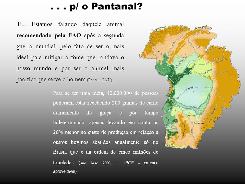. . . p/ o Pantanal