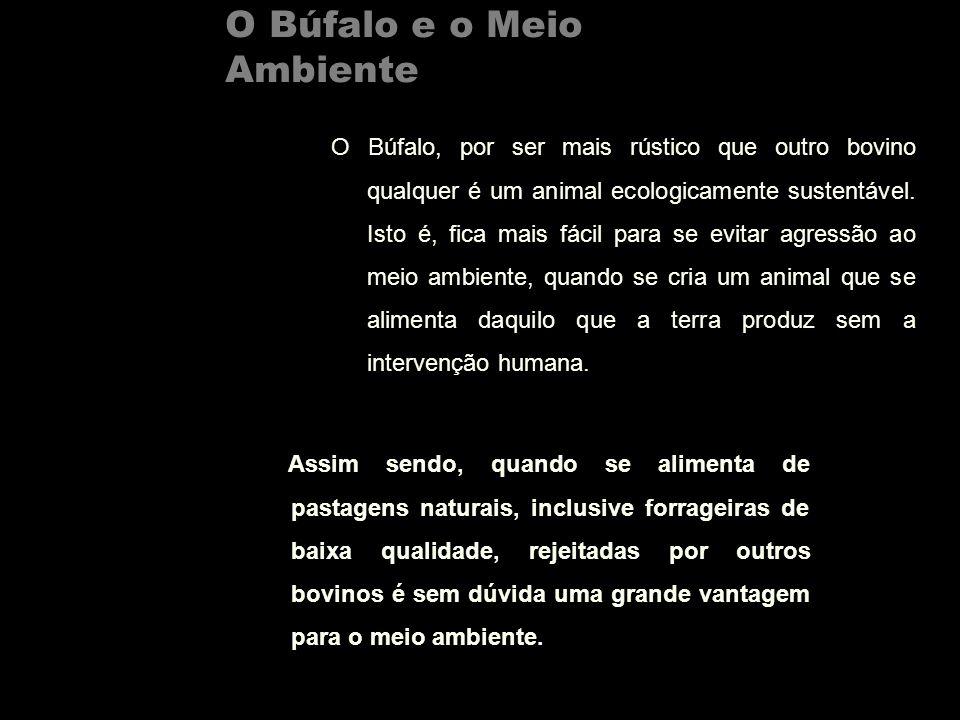 O Búfalo e o Meio Ambiente