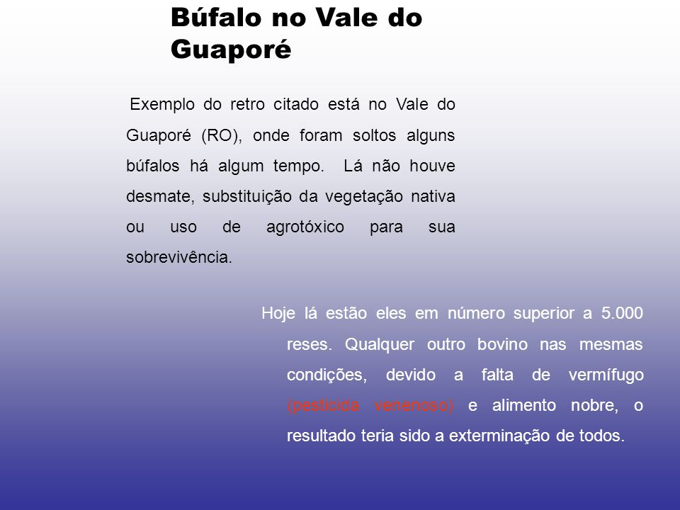 Búfalo no Vale do Guaporé