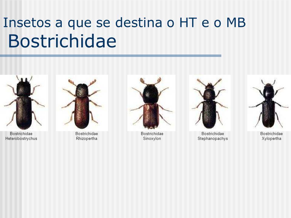 Insetos a que se destina o HT e o MB Bostrichidae