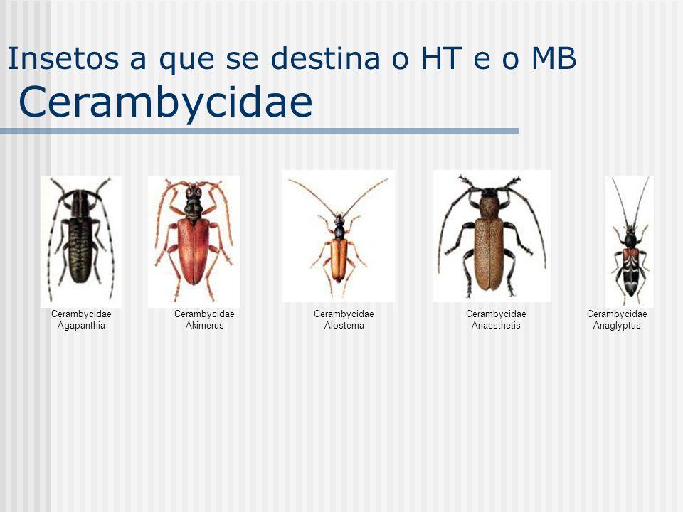 Insetos a que se destina o HT e o MB Cerambycidae