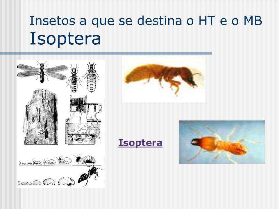 Insetos a que se destina o HT e o MB Isoptera