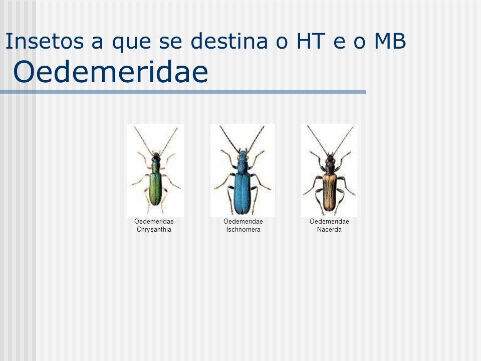 Insetos a que se destina o HT e o MB Oedemeridae