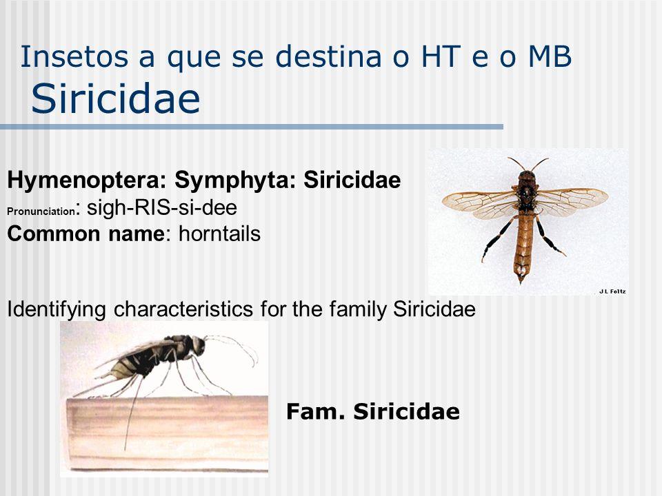 Insetos a que se destina o HT e o MB Siricidae