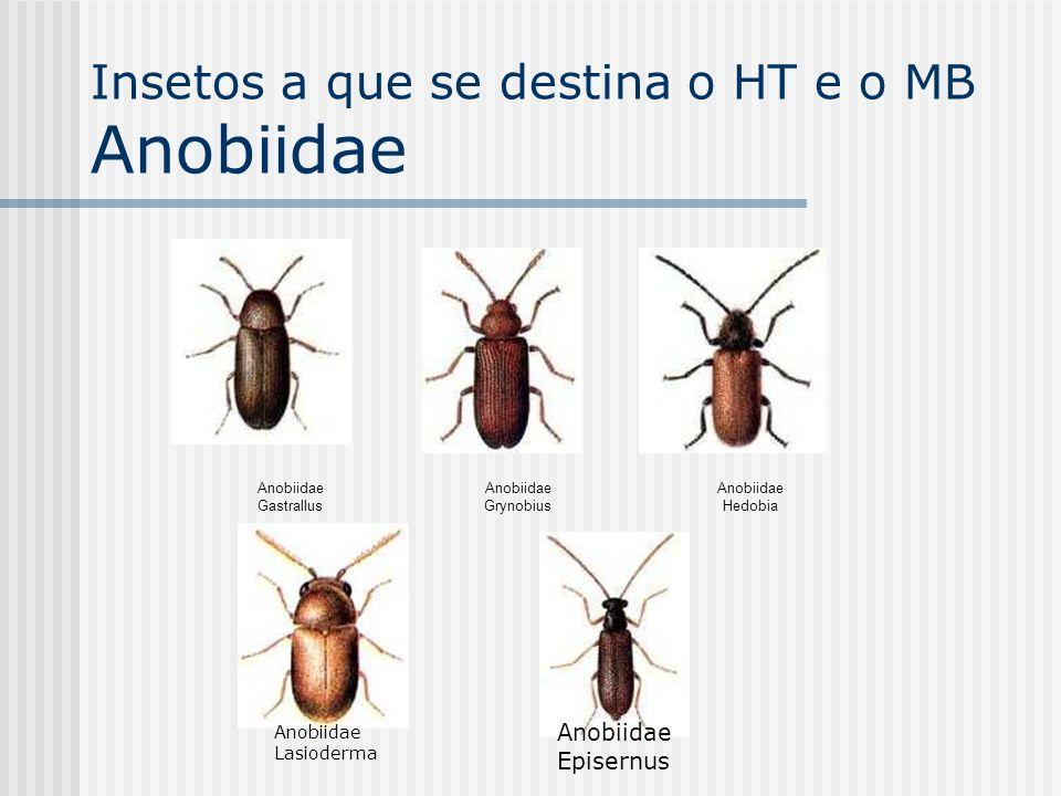 Insetos a que se destina o HT e o MB Anobiidae