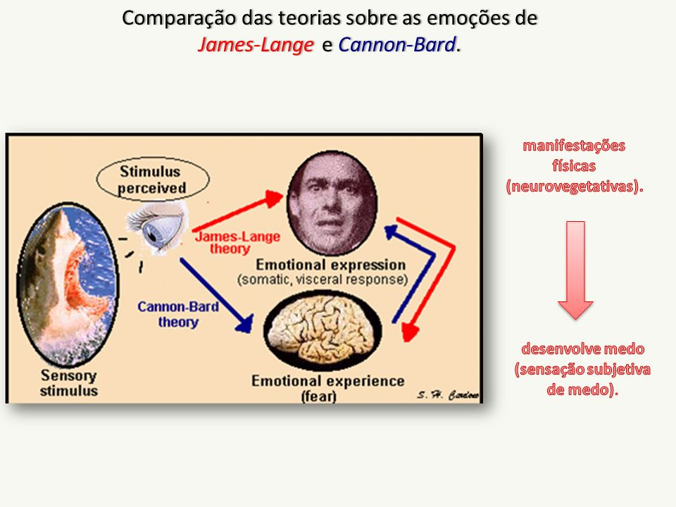 manifestações físicas (neurovegetativas).