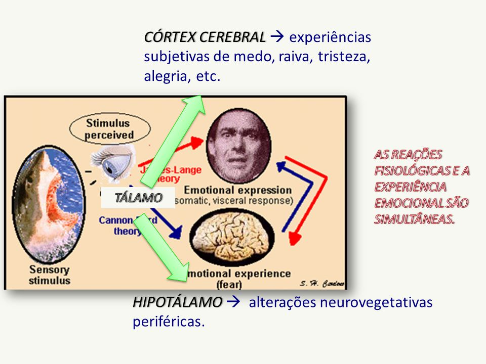 HIPOTÁLAMO  alterações neurovegetativas periféricas.