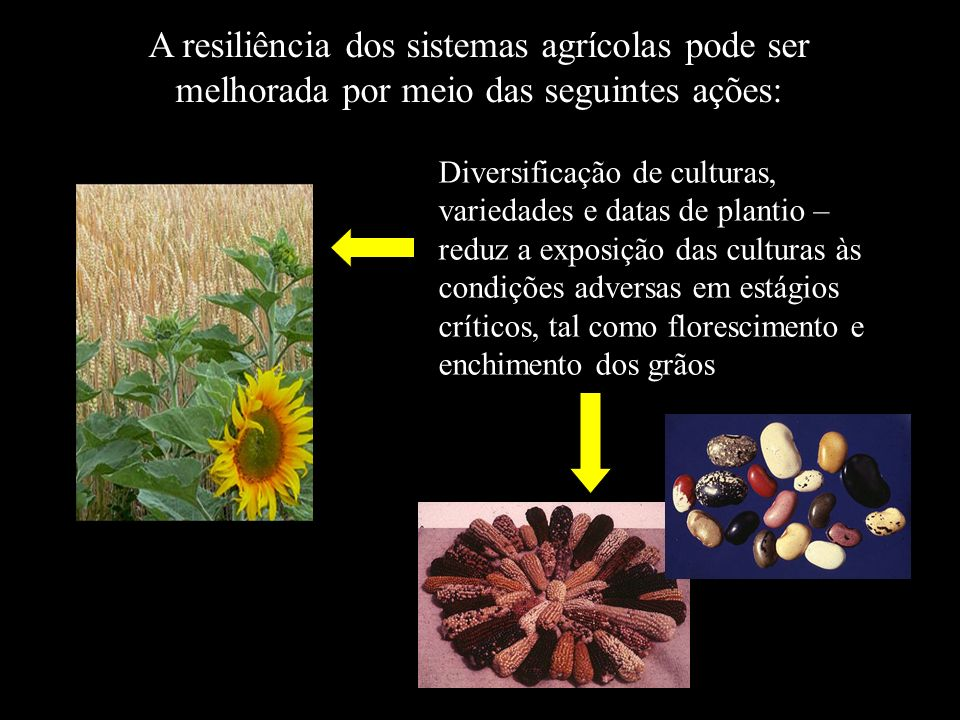 A resiliência dos sistemas agrícolas pode ser melhorada por meio das seguintes ações: