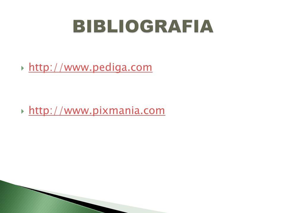 BIBLIOGRAFIA http://www.pediga.com http://www.pixmania.com