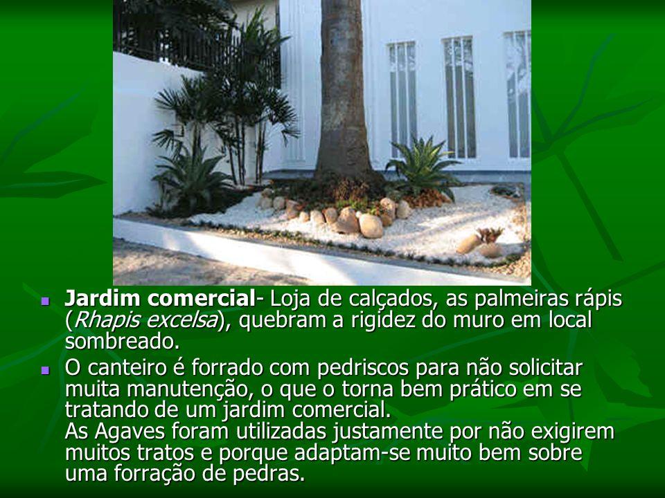 Jardim comercial- Loja de calçados, as palmeiras rápis (Rhapis excelsa), quebram a rigidez do muro em local sombreado.