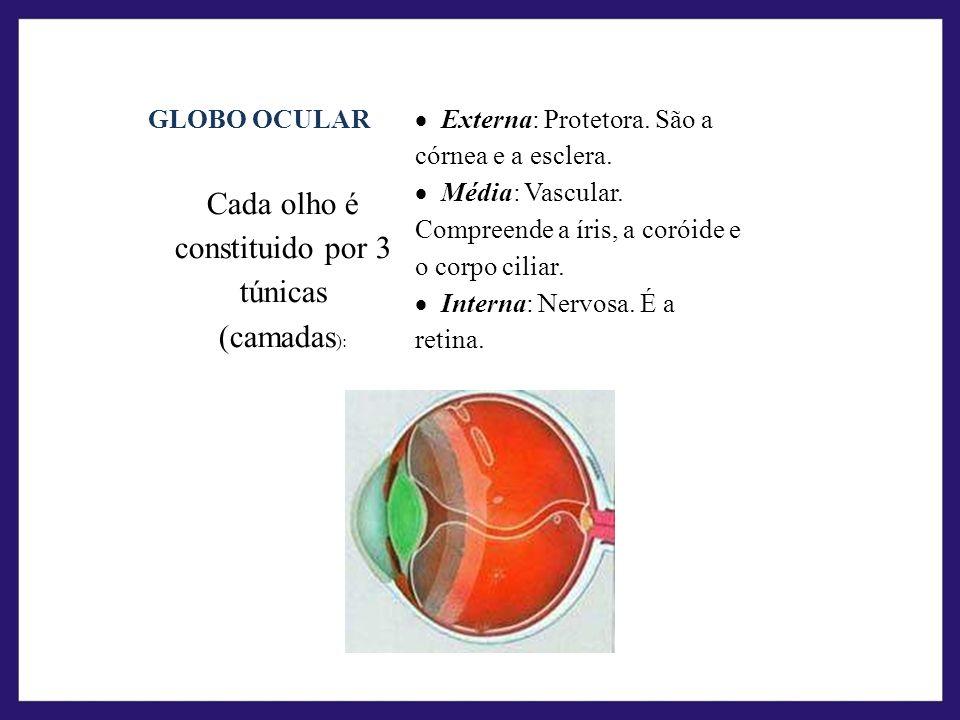 Cada olho é constituido por 3 túnicas (camadas):