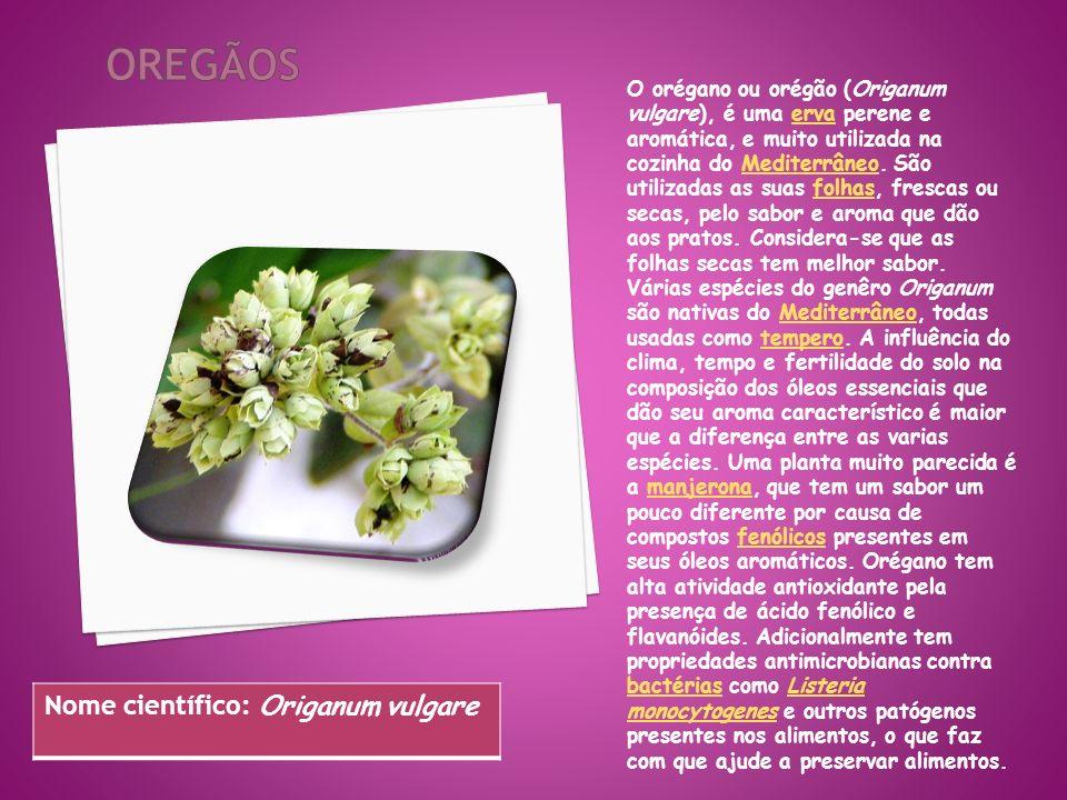 oregãos Nome científico: Origanum vulgare