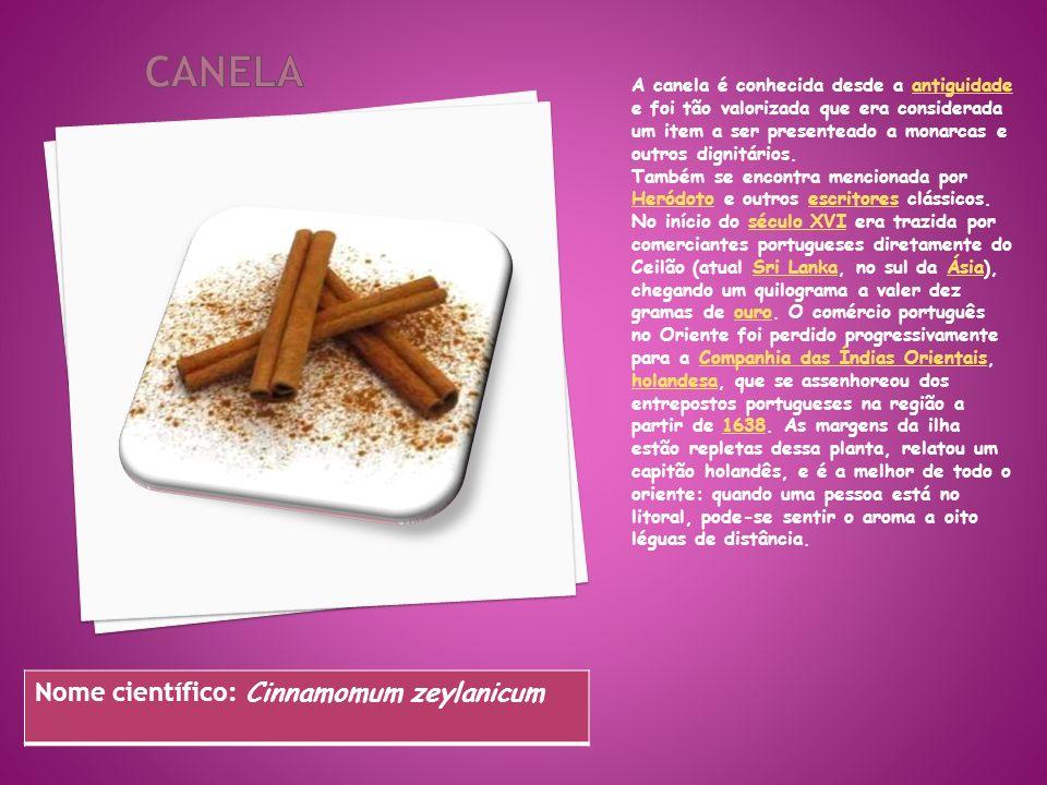 CANELA Nome científico: Cinnamomum zeylanicum