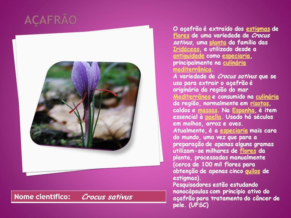 Açafrão Nome científico: Crocus sativus