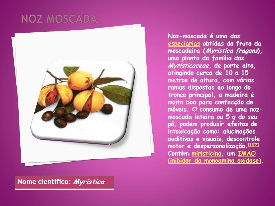 Noz moscada Nome científico: Myristica