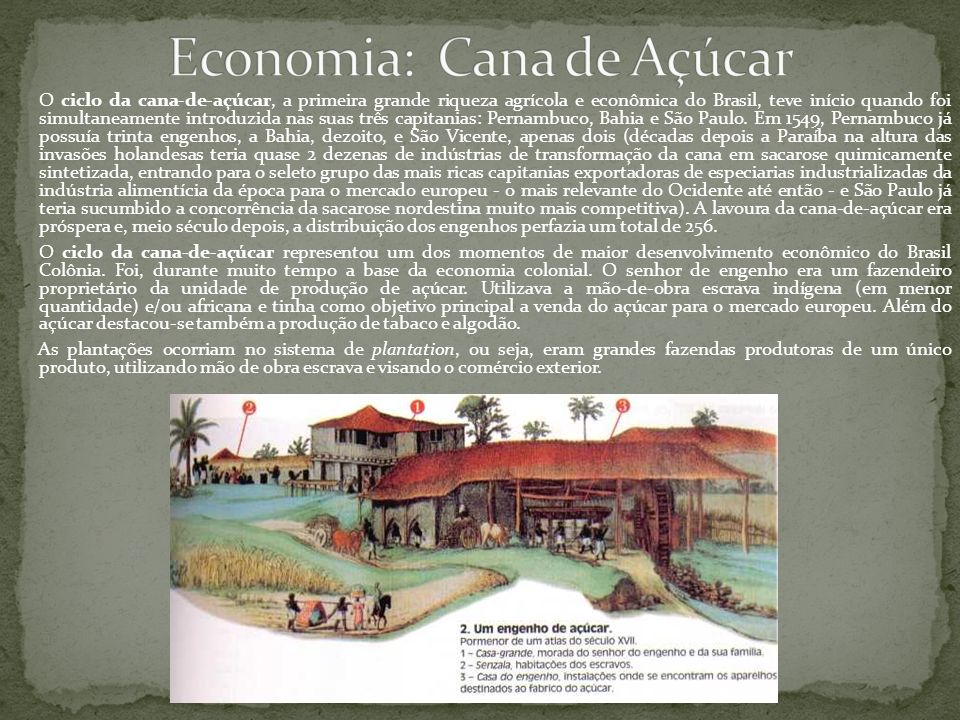 Economia: Cana de Açúcar