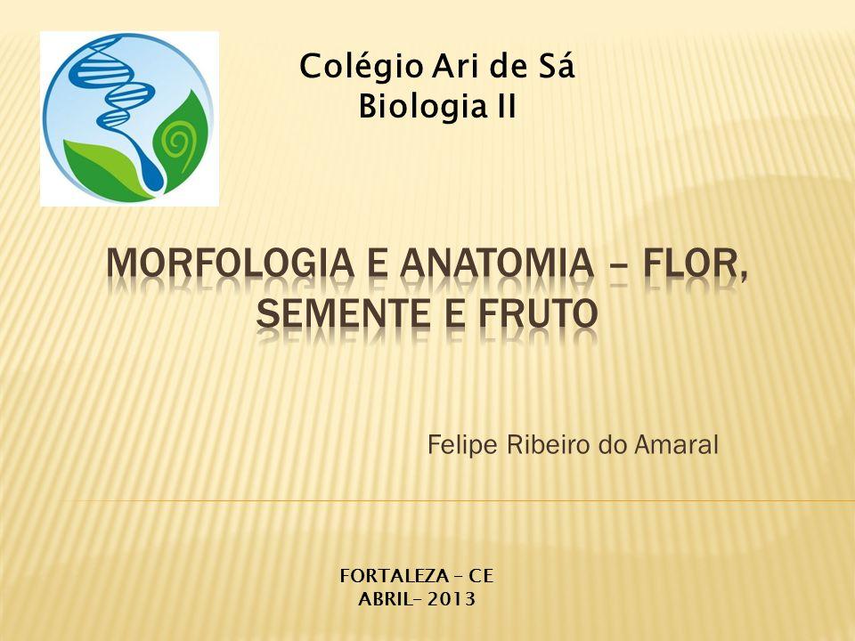 Morfologia e Anatomia – Flor, Semente e Fruto