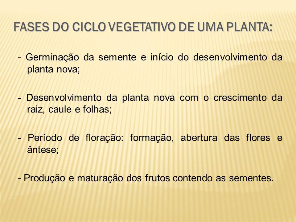 FASES DO CICLO VEGETATIVO DE UMA PLANTA: