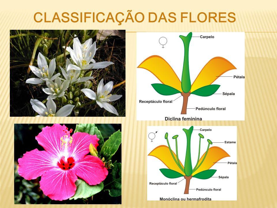 CLASSIFICAÇÃO DAS FLORES