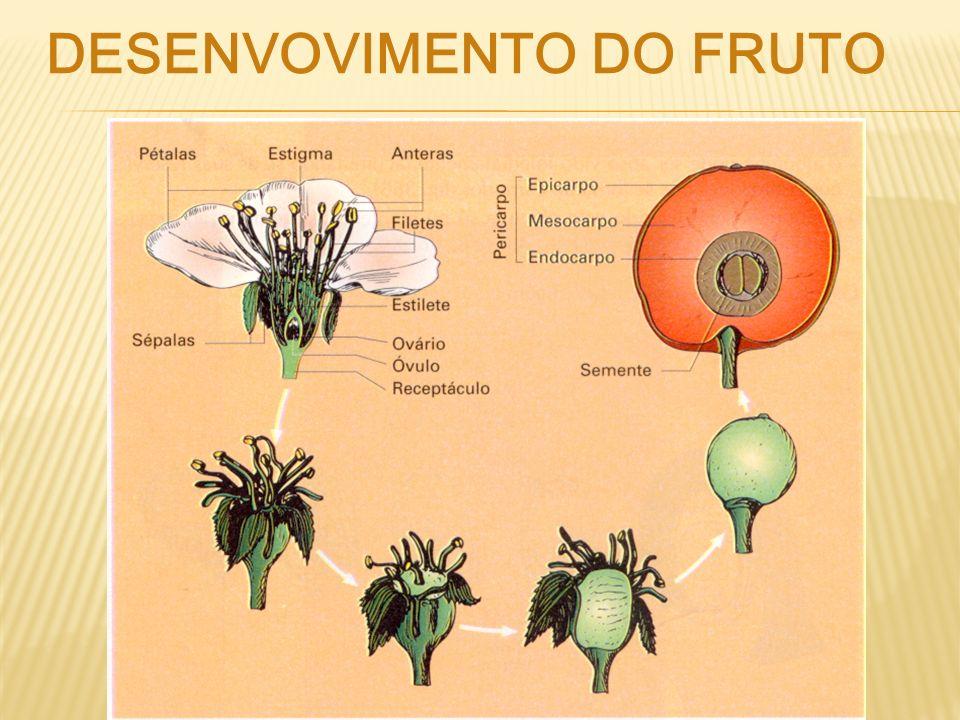 Desenvovimento dO fruto