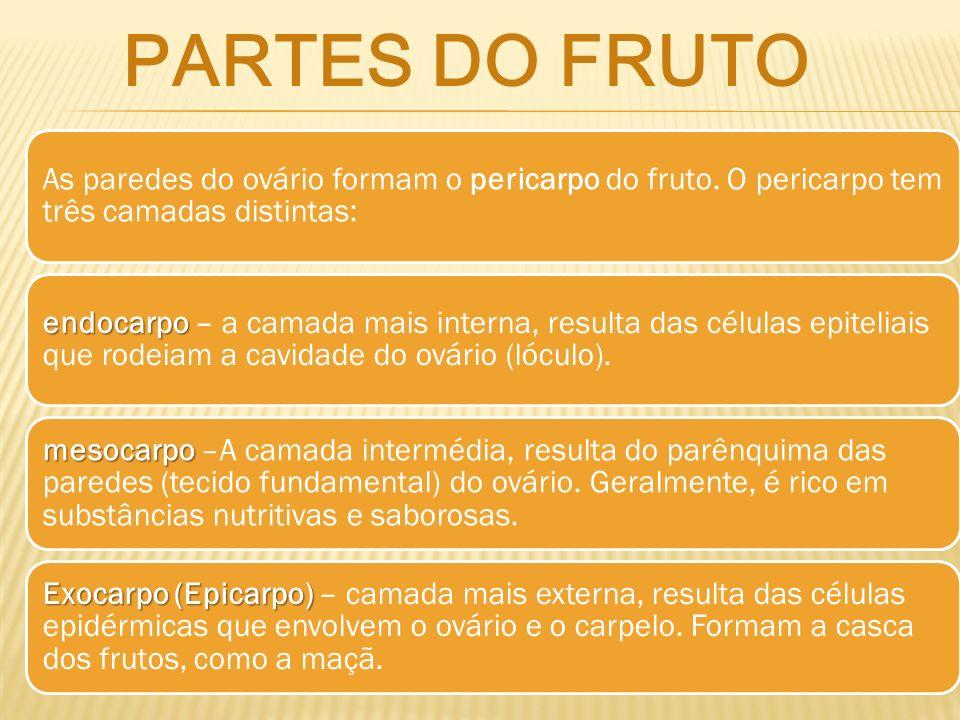 partes dO fruto As paredes do ovário formam o pericarpo do fruto. O pericarpo tem três camadas distintas: