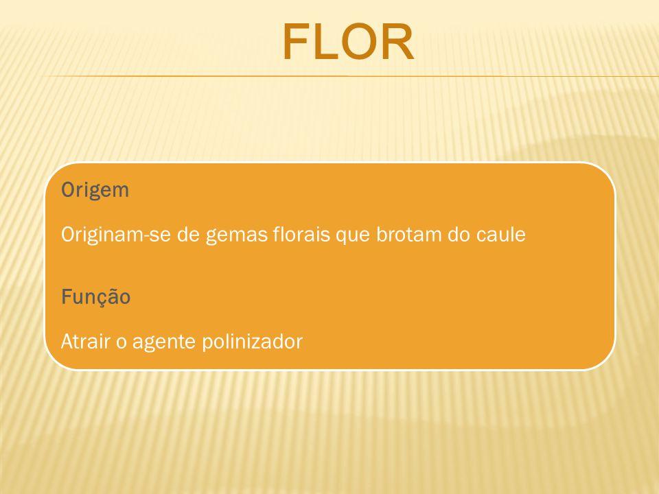 flor Origem Originam-se de gemas florais que brotam do caule
